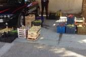 Sequestrati 4 quintali di uva   Era piena di pesticidi