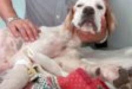 E' morto Tao, il cane ritrovato in fin di vita cinque anni fa dentro un cassonetto