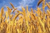 Difesa del grano, venerdì gli agricoltori manifestano a Palermo