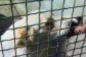 Gestione del nuovo canile di Trapani, pubblicato un avviso