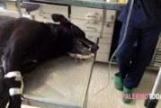 Lager per cani nell'ex fabbrica del lievito: animali salvati dalla municipale