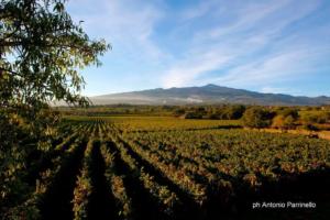 """""""5 Stars Wines The Book"""", nella bibbia dei winelovers tre vini etnei"""