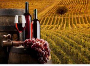 Monaci delle terre nere, tutto pronto per un wine taste
