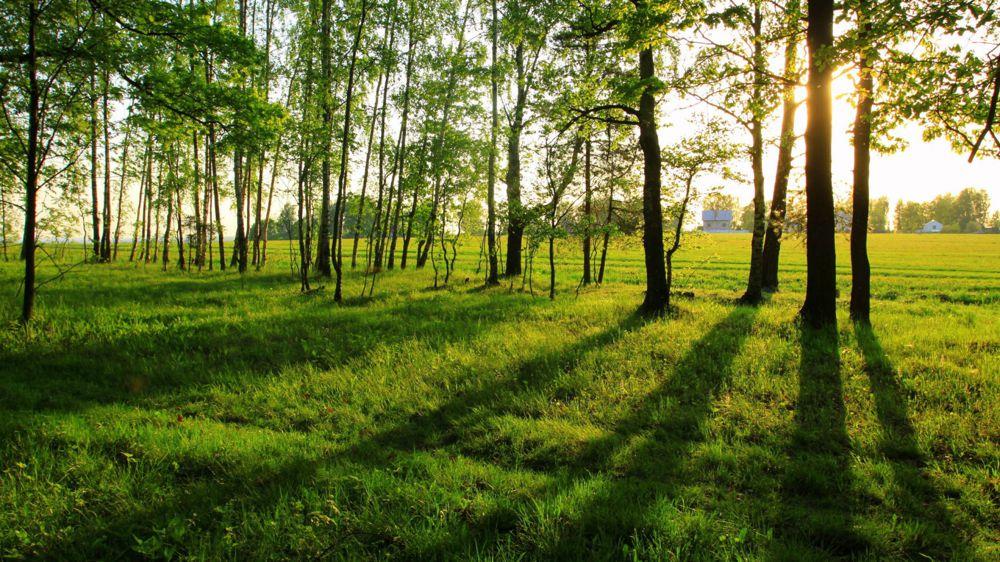 treedom la piattaforma che permette di piantare alberi