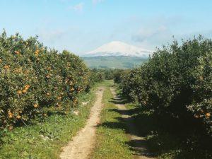 Appello di Cia Catania al Ministro: salvare le produzioni agrumicole