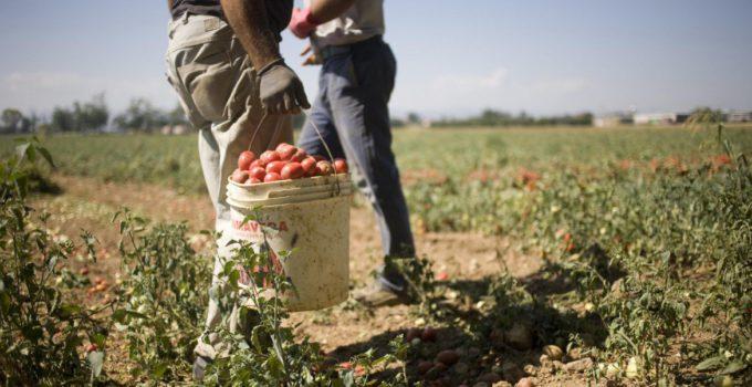 Aiuti agricoltura