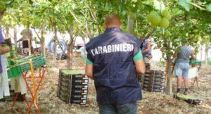Caporalato in agricoltura, blitz dei carabinieri: multe per 160 mila euro