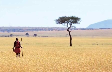 Se si ama la natura, il contatto con l'acqua e un clima caldo, un luogo stupendo da visitare è senz'altro il Kenya, uno stato dell'Africa Orientale bagnato dalle acque dell'Oceano Indiano. Cosa vedere in Kenya: Il Parco Nazionale di Nairobi Una delle attrazioni principali del Kenya si trova nella sua capitale, Nairobi. Parliamo del Parco Nazionale della città, un vero e proprio parco naturale di grandissime dimensioni attraversato da numerosi percorsi in terra battuta. Per visitarlo è consigliata un'escursione di almeno mezza giornata durante la quale è possibile vedere leoni, zebre, giraffe ed altri animali. Amboseli National Park In questo