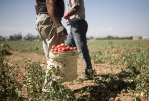 """Arrestato operaio forestale a Ribera """"caporale"""" di schiavi per i campi"""