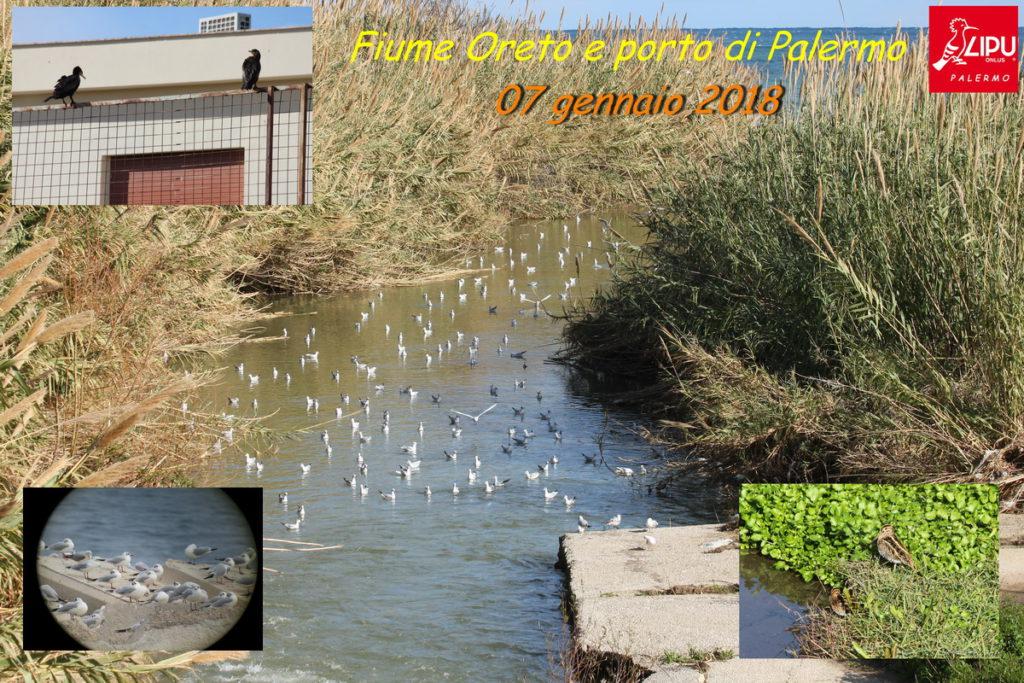 Birdwatching fiume Oreto
