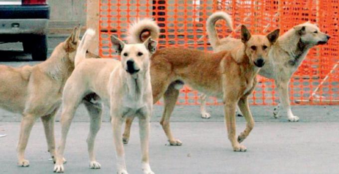 Cani randagi avvelenati a Sciacca