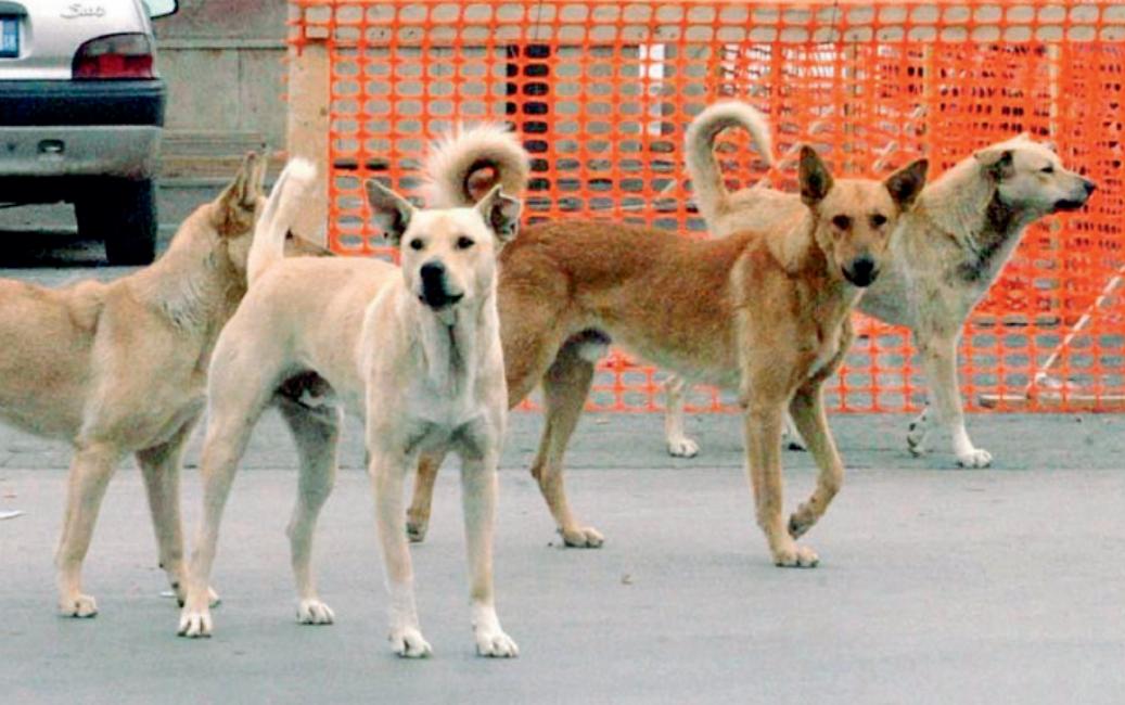 Cani randagi avvelenati a sciacca musumeci gesto vile for Cani giocherelloni