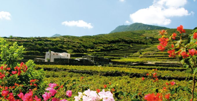 Rimboschimento e biodiversità Pantelleria
