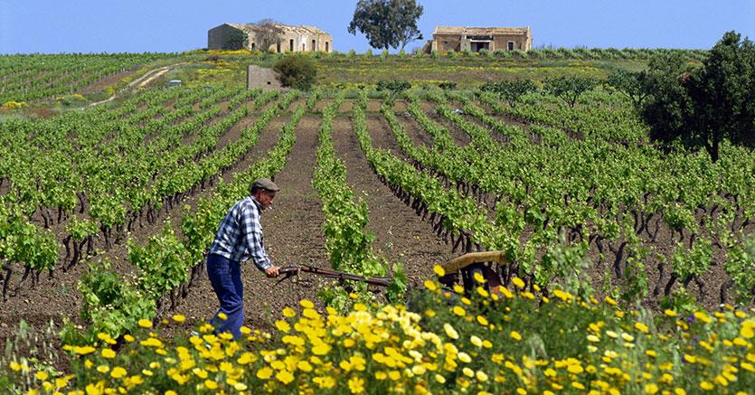 crisi agricola sicilia