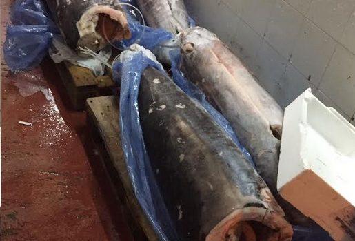 sequestrata attività abusiva vendita pesce
