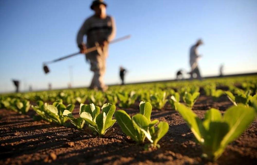 Bando agricoltura