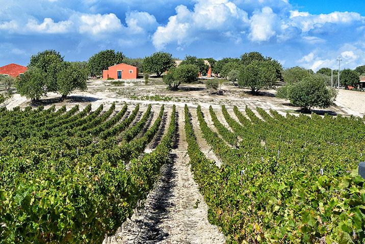 Aziende vinicole siciliane