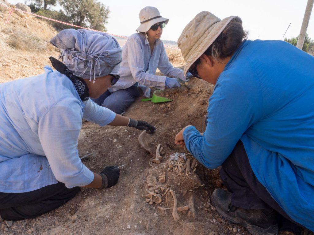 Scavi archeologici in Sicilia