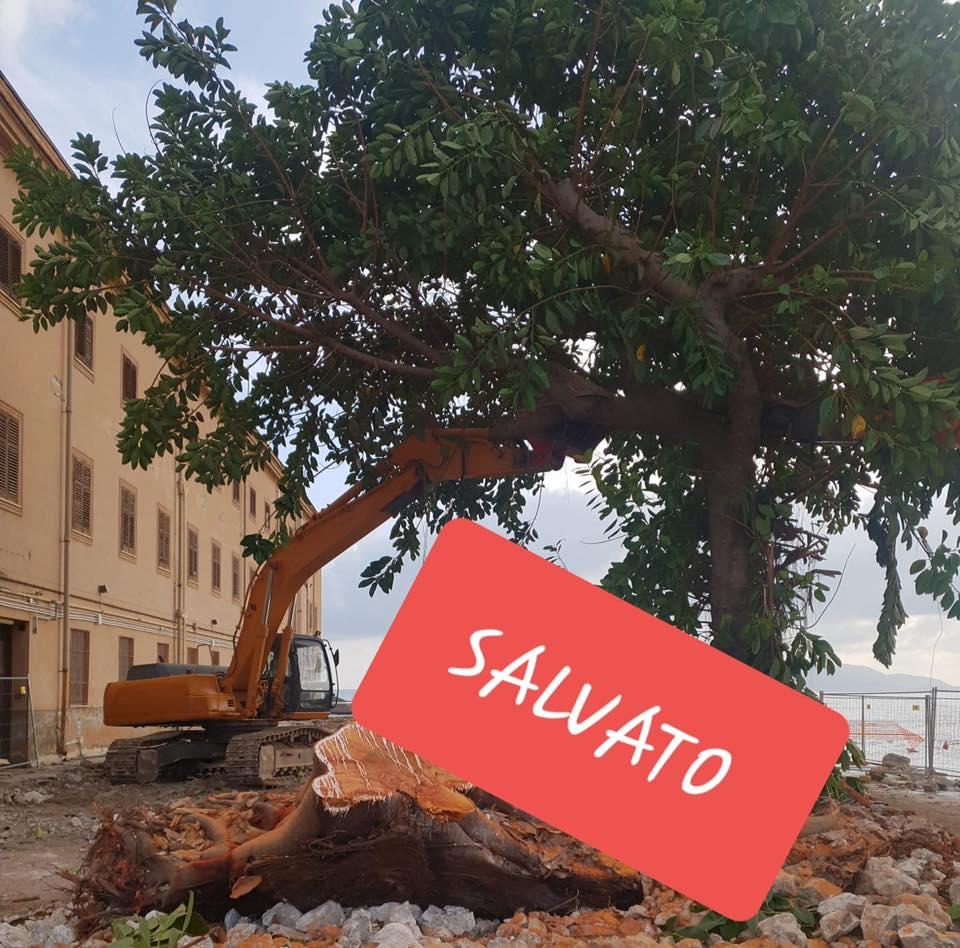 Salvi gli alberi di Sant'Erasmo