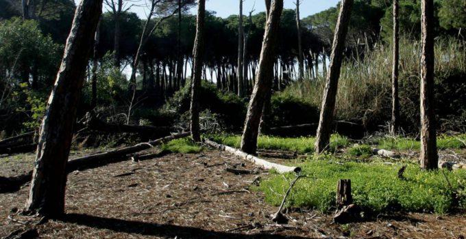 Boschetto Plaia e spiagge libere a Catania