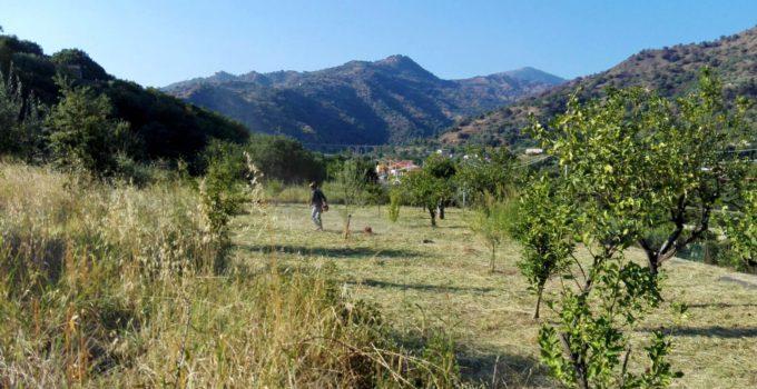 In Sicilia cresce la foresta Credem