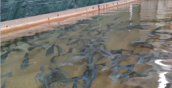 Azienda itticoltura di Pachino