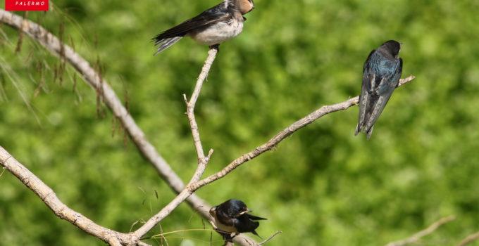 Birdwatching estivo al fiume Oreto