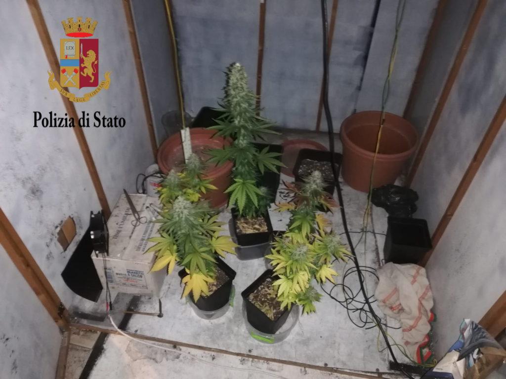 Piante di marijuana in garage