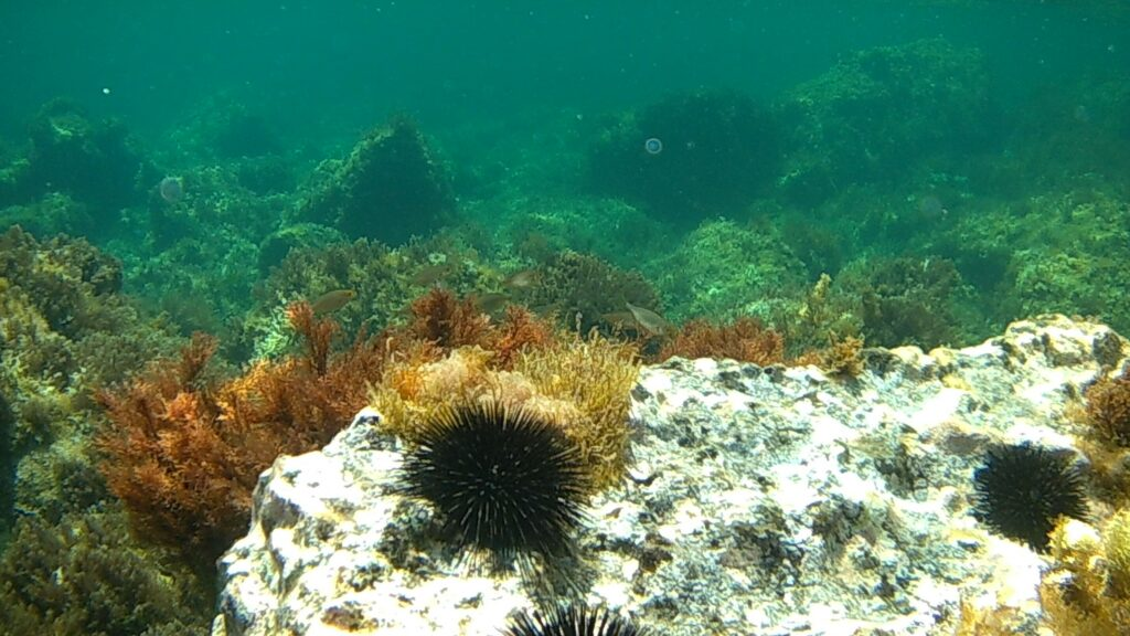 WWF Sicilia informa sul fermo biologico