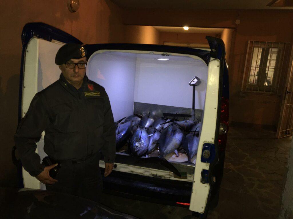 Sequestrati 22 esemplari di tonno rosso