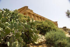 La Natura si è ripresa la Valle dei Templi di Agrigento