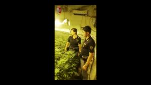 Serra indoor di marijuana scoperta in un appartamento di Settecannoli