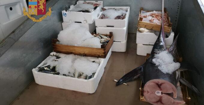 Donati 70 kg di pesce