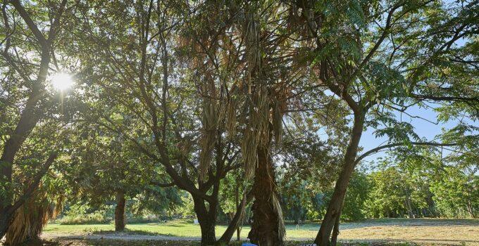 Progetto Parco di Villa Tasca