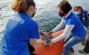 Liberazione tartaruga marina, consorzio dell'Area Marina protetta di Capo Milazzo